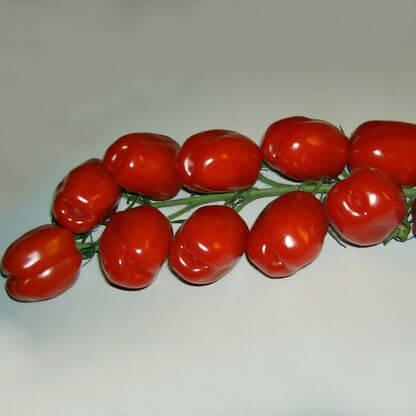 San Mazzo Tomate