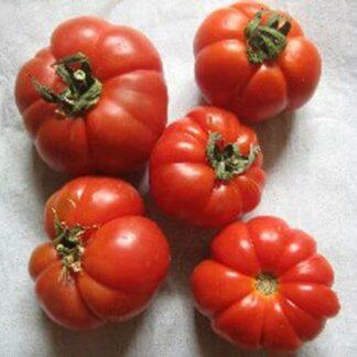 Tomate Mirinda
