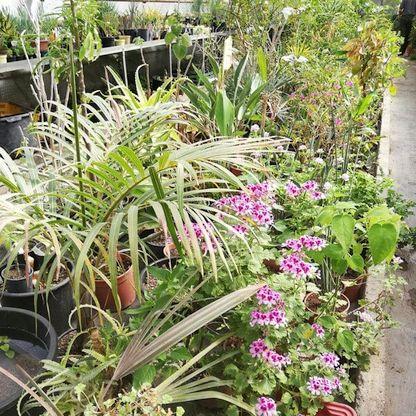 Pflanzenvielfalt
