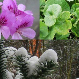 Pflanzen thematisch